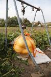 Гигантские тыквы из урожая семьи Колтыковых, Фото: 43