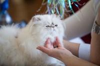 Международная выставка кошек. 16-17 апреля 2016 года, Фото: 85