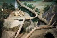 Тульский экзотариум: животные, Фото: 43