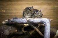 Тульский экзотариум: животные, Фото: 44