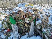 Под Тулой неизвестные сбросили в лесополосе несколько тонн гнилых овощей, Фото: 9