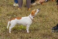 Международная выставка собак, Барсучок. 5.09.2015, Фото: 56