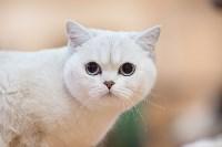 В Туле прошла выставка «Пряничные кошки» , Фото: 103