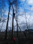 Сильный ветер в Туле повалил деревья, Фото: 7