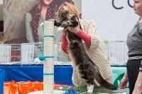Выставка кошек в Туле, Фото: 11