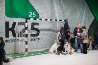 Выставка собак в Туле, Фото: 83