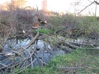 Спиленные деревья в ручье березовой рощи, Фото: 3