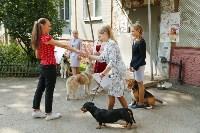Фитнес-центр «Собака-Улыбака» в Туле: человек собаке – хендлер, Фото: 1