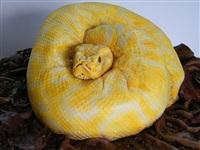 Змеиный пирог., Фото: 11
