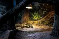 Тульский экзотариум: животные, Фото: 5