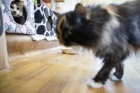 Волонтеры спасли кошек из адской квартиры, Фото: 2
