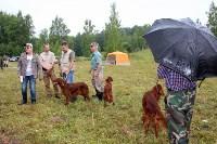 Выставка охотничьих собак под Тулой, Фото: 49