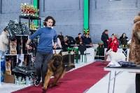Выставка собак в Туле, Фото: 69