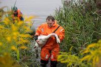 В Туле спасли лебедя с одним крылом, Фото: 27