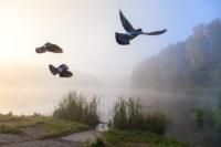 Центральный парк, утро, осень, Фото: 6