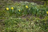 Весна 2020 в Туле: трели птиц и первые цветы, Фото: 45