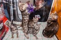 Международная выставка кошек. 16-17 апреля 2016 года, Фото: 102