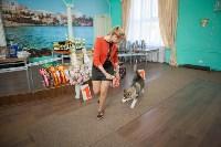 Выставка собак в Туле, 29.11.2015, Фото: 76