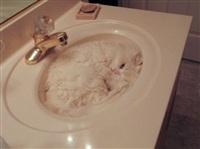 Спящие коты, Фото: 5