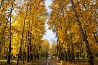 Золотая осень в Туле-2019, Фото: 64