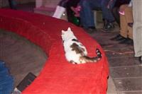 Программа «Спокойной ночи, малыши!» подарила тульским малышам праздник!, Фото: 51