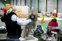 Выставка собак в Туле 14.04.19, Фото: 51