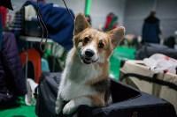 Выставка собак в Туле, Фото: 68