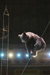 Новая программа в тульском цирке, Фото: 18