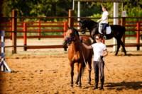 Новые лошади для конной полиции в Центральном парке, Фото: 4