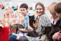Выставка кошек в МАКСИ, Фото: 51