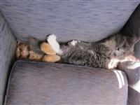 Кошки и собаки, проигравшие битву с мебелью, Фото: 4