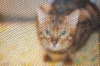 Международная выставка кошек. 16-17 апреля 2016 года, Фото: 71