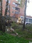 """У ресторана """"Пафос"""" срубили шесть здоровых берез, Фото: 13"""