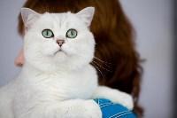 Выставка кошек. 4 и 5 апреля 2015 года в ГКЗ., Фото: 109