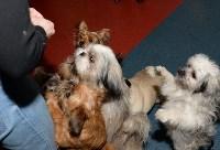 Выставка собак DogLand, Фото: 5