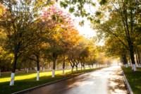 Центральный парк, утро, осень, Фото: 47