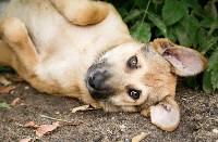 Собаки на тульской метеостанции, Фото: 9