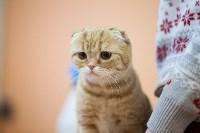 В Туле прошла выставка «Пряничные кошки» , Фото: 96