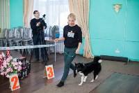 Выставка собак в Туле, 29.11.2015, Фото: 97