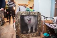 Всероссийская выставка собак 2017, Фото: 38