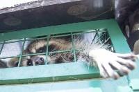 Зоопарк на набережной Упы в Туле, Фото: 25