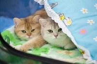 Международная выставка кошек. 16-17 апреля 2016 года, Фото: 97
