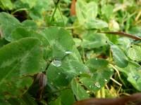 капильки дождя, кристально-чистые! Пусть все отношения в твоей жизни будут прозрачными и искренними!, Фото: 5
