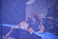 Цирковое шоу, Фото: 103