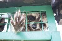 Зоопарк на набережной Упы в Туле, Фото: 24