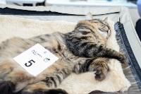 """Выставка """"Пряничные кошки"""" в ТРЦ """"Макси"""", Фото: 3"""