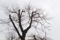 Кронированные деревья на ул.Октябрьской. 7.04.2015, Фото: 2