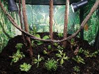 Укротитель хищных растений Сергей Куницын, Фото: 4