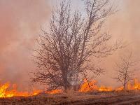 В Федоровке огонь с горящего поля едва не перекинулся на дома, Фото: 9