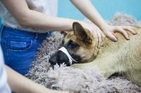 Спасение рядового пса, Фото: 10